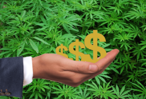 Hand holding money signs with cannabis leaves in the background